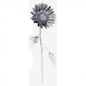 Girasole argento cm. 46